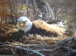 Decorah Eagles.4.5.20